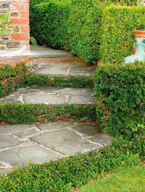 Stopnie schodów z roślinami