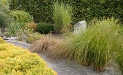 Trawy ozdobne w ogrodzie. Najładniejsze gatunki traw i ich uprawa
