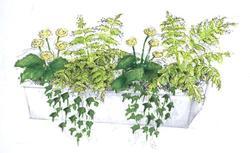 Kompozycja z kwiatów doniczkowych na zacieniony balkon lub taras